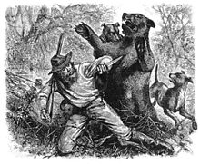 Hugh Glass being attacked by a grizzly bear in 1823, from an early newspaper illustration dated June 3, 1823
